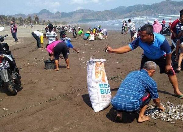 Warga memungut ratusan ribu ikan di pantai jetis yang terdampar
