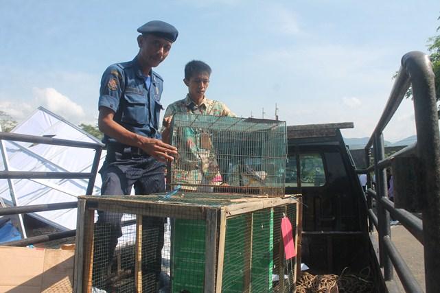 Jual Burung Alap-alap Secara Online, Ditangkap Polisi