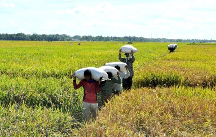 Petani Cilacap Optimis Ditengah Wabah COVID-19