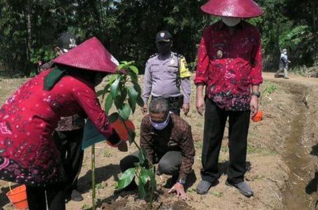 TANAM ALPUKAT: Bupati Banyumas Achmad Husein dan Ketua Tim Penggerak PKK Kabupaten Erna Husein, menanam pohon buah Alpukat secara simbolis sebagai tanda dimulainya pengelolaan.