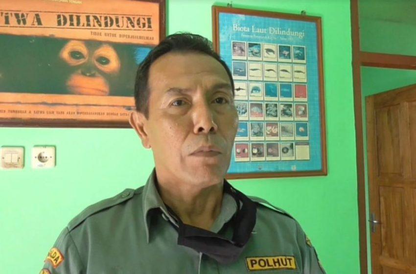 BERI PENJELASAN: Koordinator Polisi Kehutanan BKSDA Resor Konservasi Wilayah Cilacap, Dedy Rusyanto memberikan penjelasan terkait munculnya buaya muara di kawasan Segara Anakan. (Wagino)