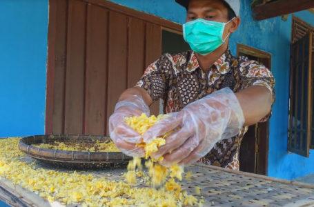 UKM: Anggota Kelompok Tani Gayam Sari Desa Brebeg Kecamatan Jeruklegi menjemur jagung yang telah digiling menjadi emping. (Wagino)