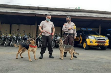 Hadapi Musim Hujan, Polres Banjarnegara Siapkan Anjing Pelacak SAR Cadaver