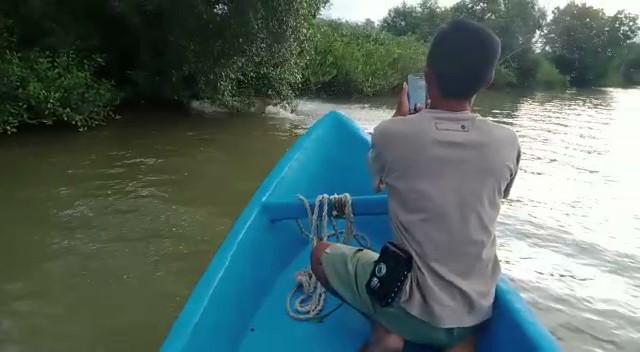 Buaya Muara Kembali Muncul Di Kampunglaut, Warga dan Nelayan Was-Was