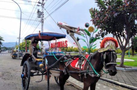 Sosialisasi Delman Wisata Belum Merata, Banyak Kusir Tak Tahu Peraturan Penempatan