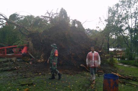 Angin Kencang Landa Purbalingga Belasan Rumah Rusak Pohon Tumbang